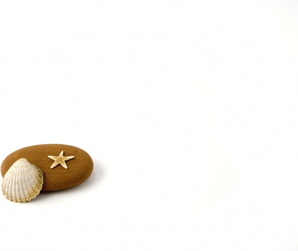 star fish shell and pebble