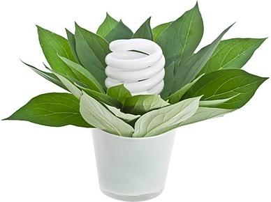 stock photo of green plants and energysaving lamps