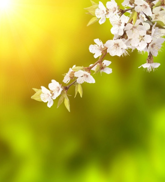 Stock Photo Of Spring Background Hd Picture Free Stock Photos In Image Format Jpg Size 5696x6276 Format For Free Download 9 47mb
