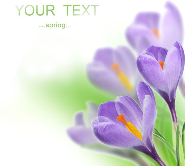 Spring flowers background free stock photos download 20431 free spring flowers background free stock photos download 20431 free stock photos for commercial use format hd high resolution jpg images mightylinksfo