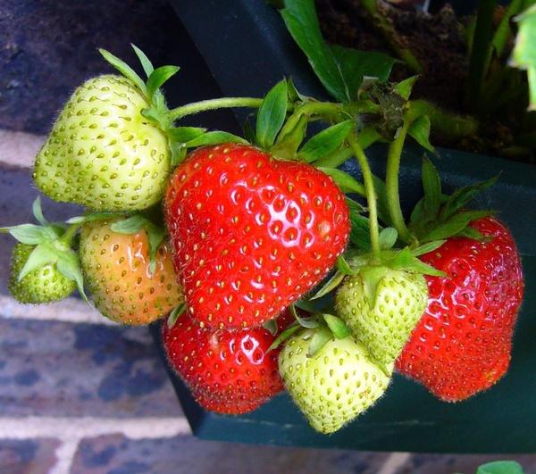 strawberries strawberry strawberry fruit