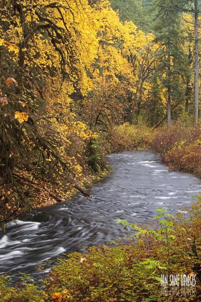 streaming through autumn