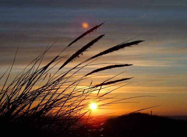 sun grass dune
