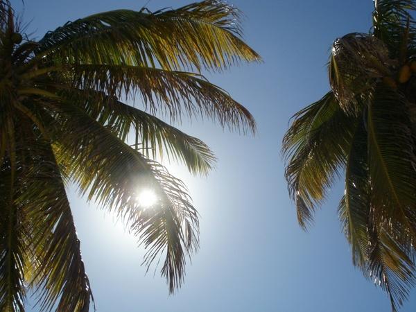 sun palm trees sky