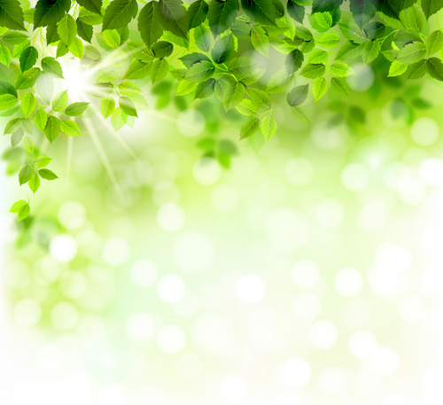 sunlight with green leaves shiny background vector free