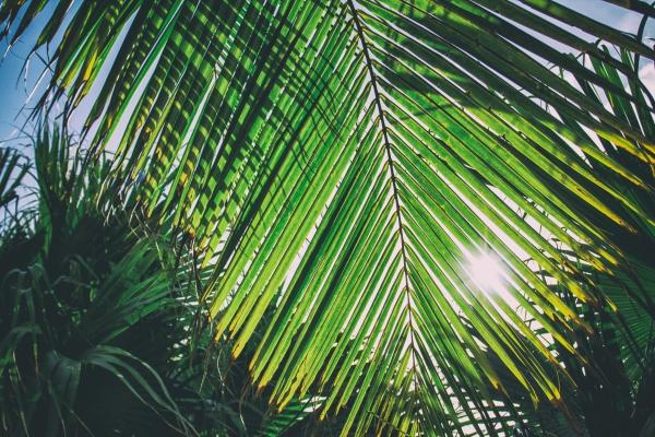 sunny palm caribbean