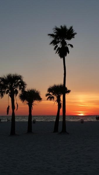 sunset palm trees coast