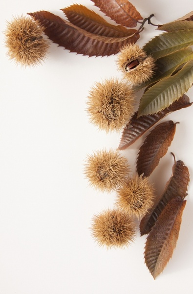 sweet chestnuts chestnuts nature