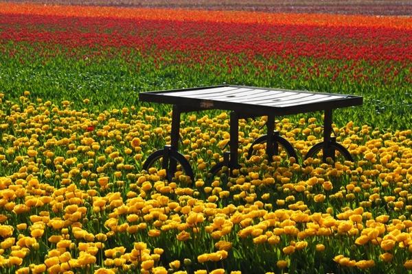 table in tulip field