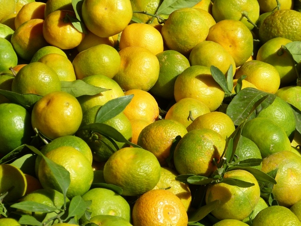 All single fruit images free stock photos download (68,397 ...