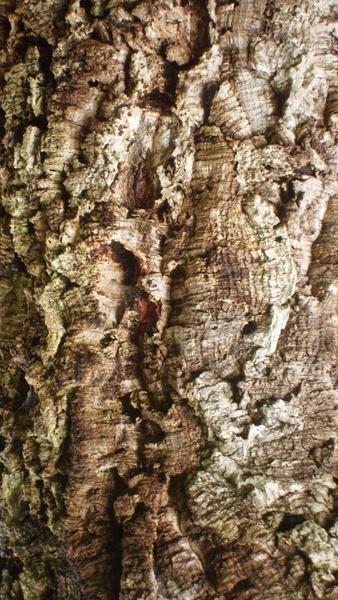 texture cork tree bark
