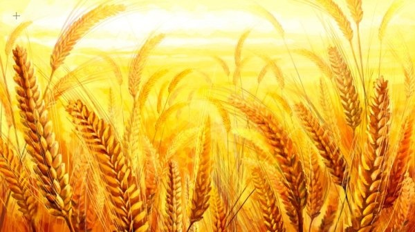 the golden wheat psd