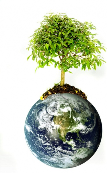the growth of trees on earth