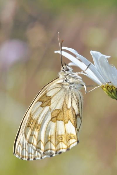 the nature of the insect butterfly