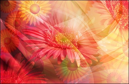 the oversized super clear flower theme stratified psd4