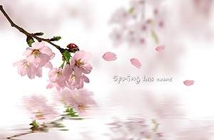 the romantic cherry psd layered