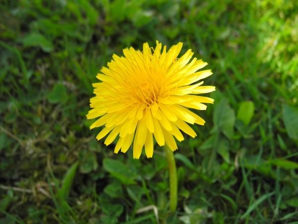 the sunshine weed