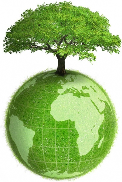 the trees and the earth picture