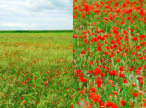 the vast expanse of green flowery hd picture 2