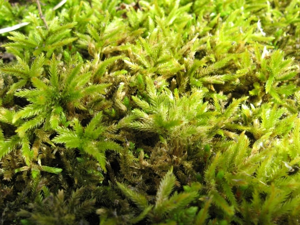 thick moss texture