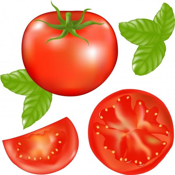 fresh tomato icons shiny colored modern design