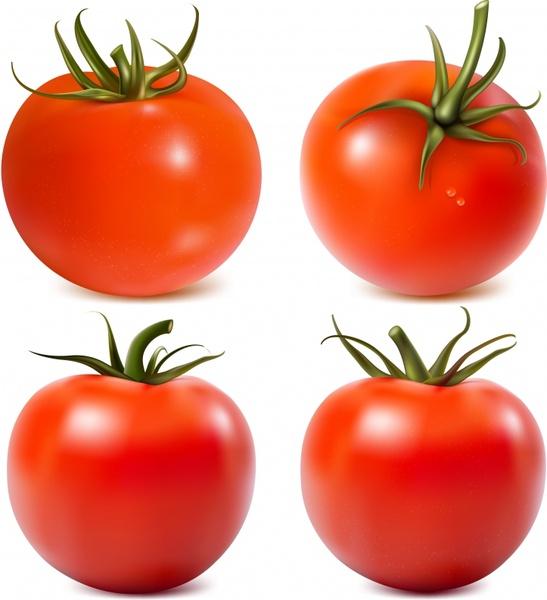tomato icons shiny modern realistic sketch
