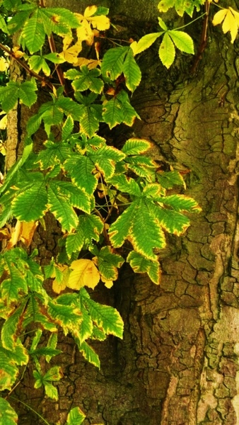 tree and leaves
