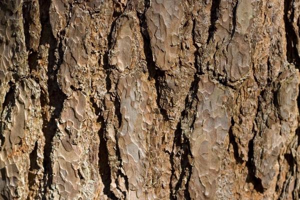 tree bark brown