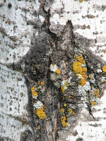 tree bark moss texture