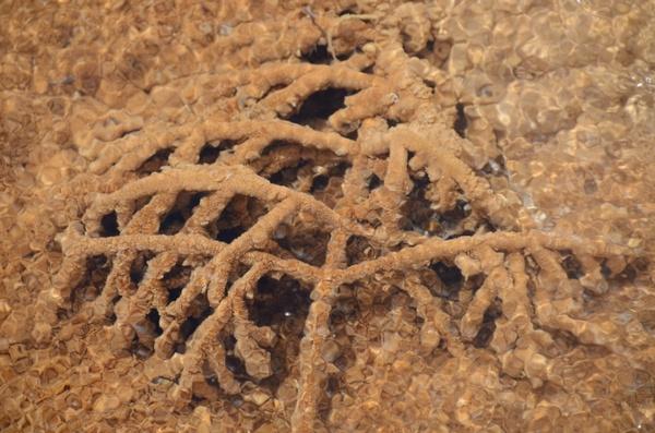 tree branch travertine mammoth hot springs