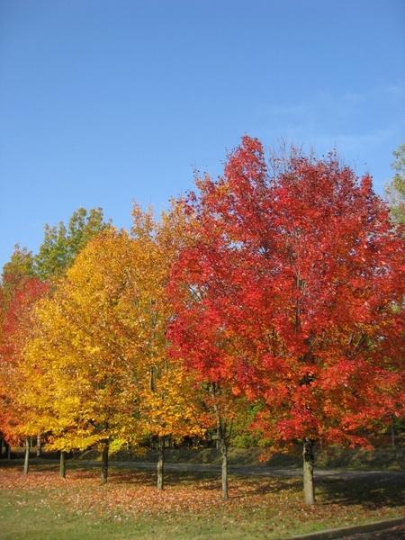 tree colors leaves