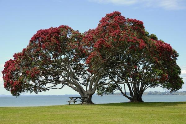 tree flower red flowers