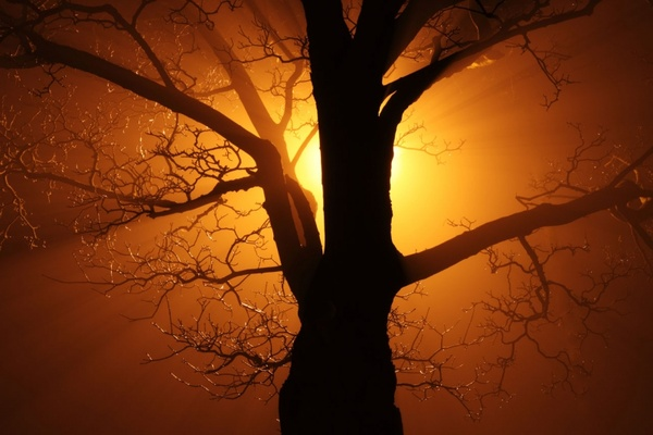 tree in fog at night