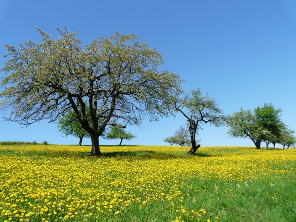tree meadow nature