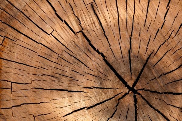 tree stump texture