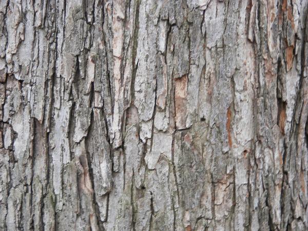 tree wood texture 2