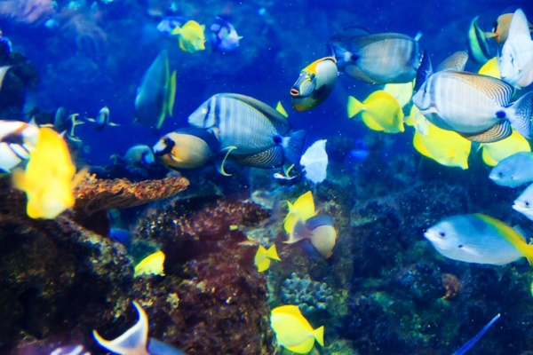 Tropical Fish Underwater Free Stock Photos In JPEG 1280x853