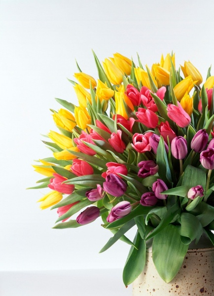 tulip bouquet hd picture