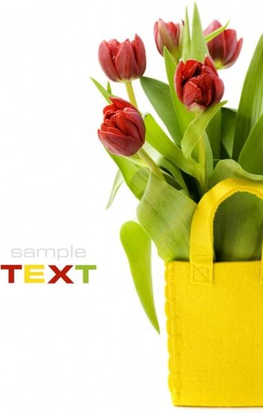tulip hd pictures