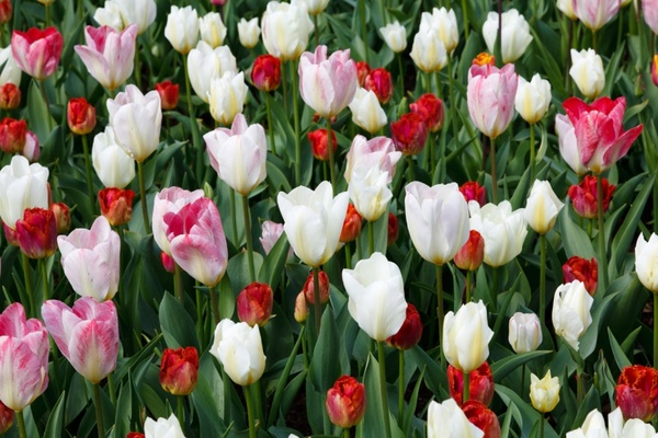 Lovely Flowers Wallpaper Free Stock Photos Download 13 258 Free
