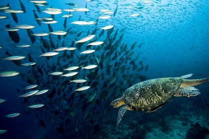 turtles and fish picture