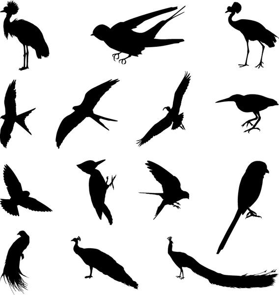 various birds silhouettes vector set