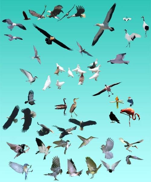 various birds summary