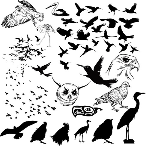 Vector Birds Silhouettes