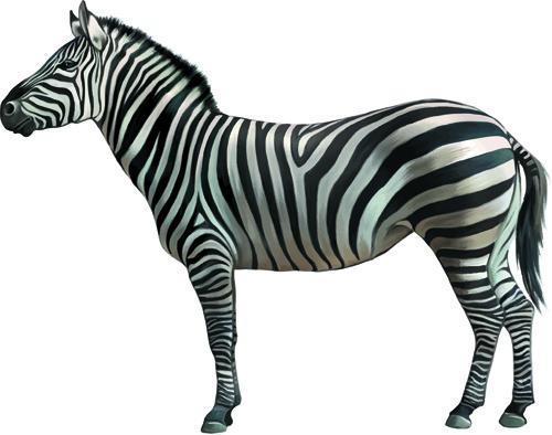 vector set realistic animal design