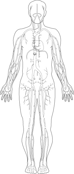 veins medical diagram clip art free vector in open office drawing svg    svg   vector