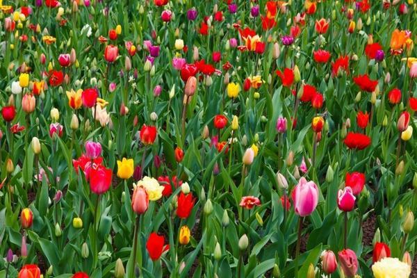 vivid colorful flowers