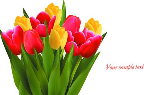Bunga Tulip Free Vector Download 168 Free Vector For
