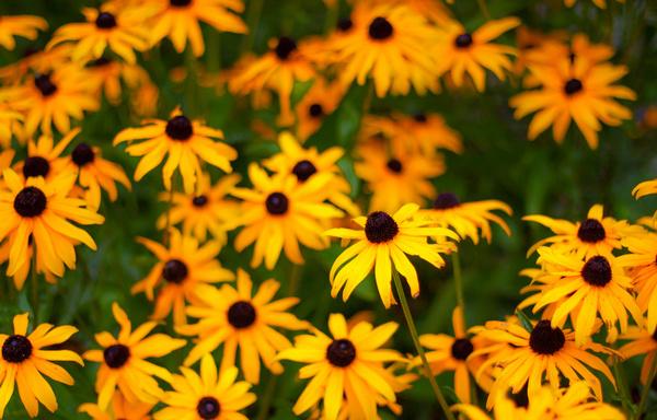 warm as yellow