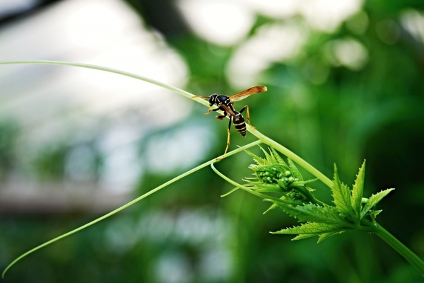 wasp insects greenhouse